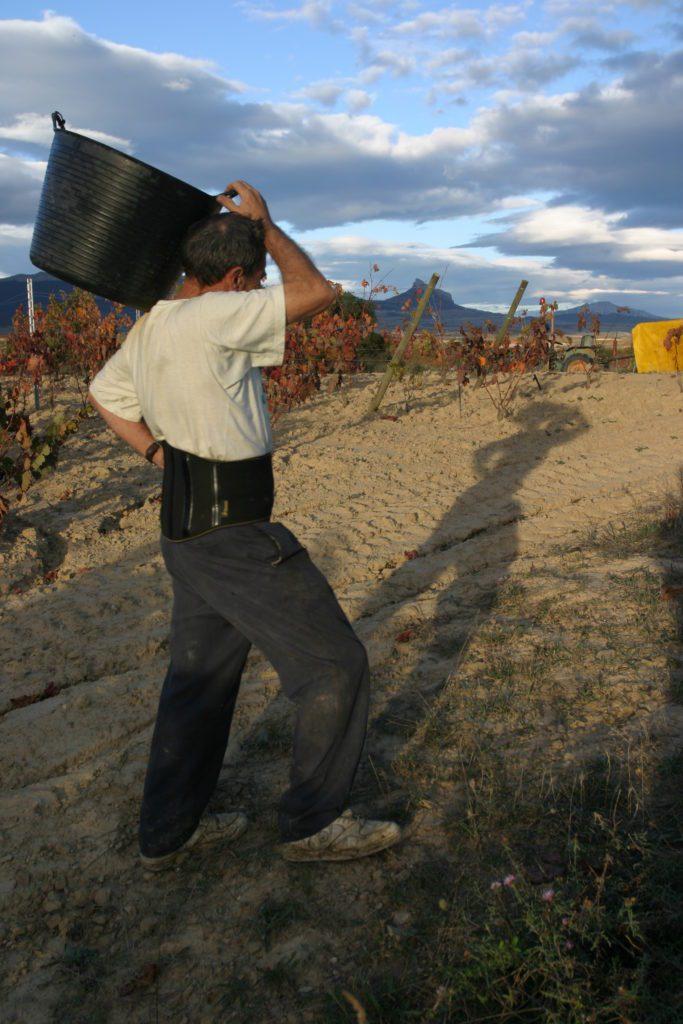 Vendimias en Laguardia (Rioja Alavesa). Fotografia Aitora Ayesa