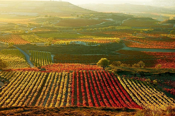 Enoturismo en Álava, un viaje al mundo del vino; embébete de nuestra cultura. (I parte: Rioja Alavesa)